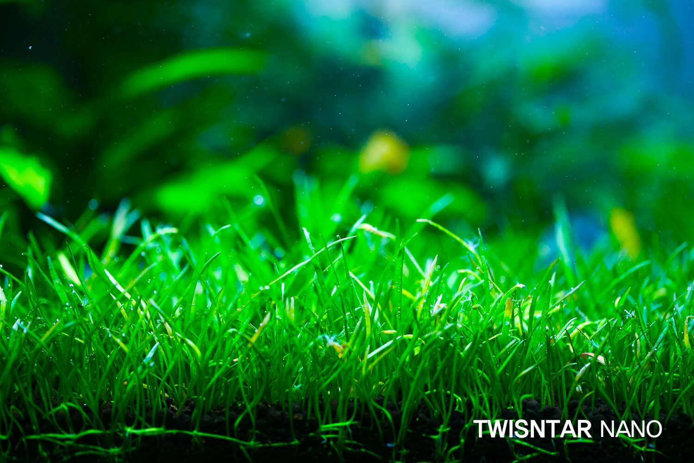 twinstar nano9
